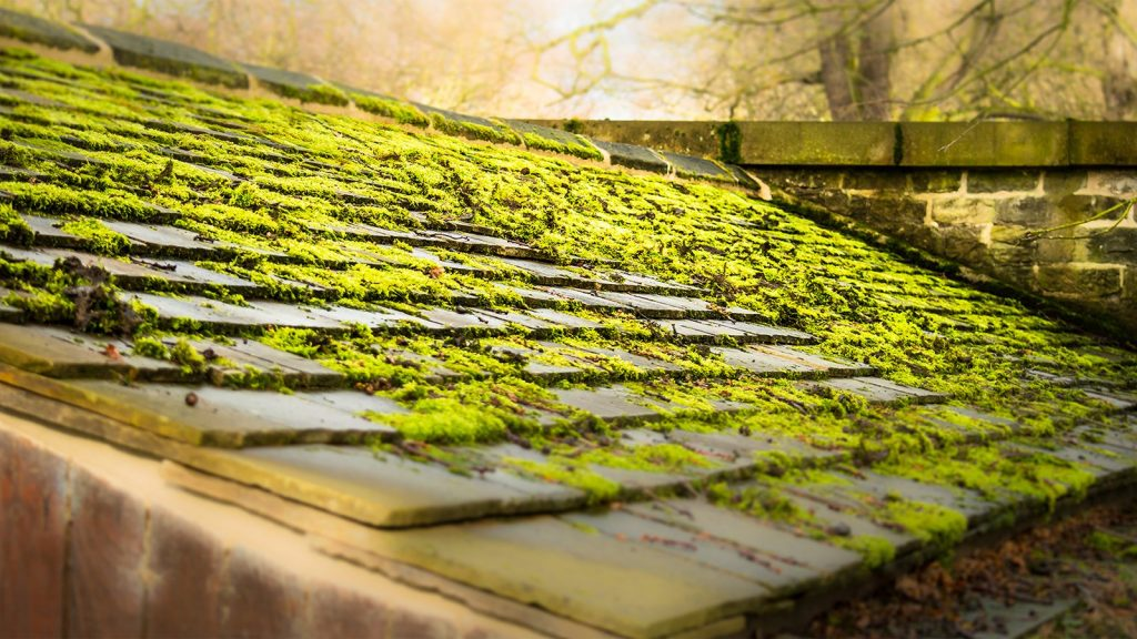 plants and moss on the roof is a signs you need a new roof