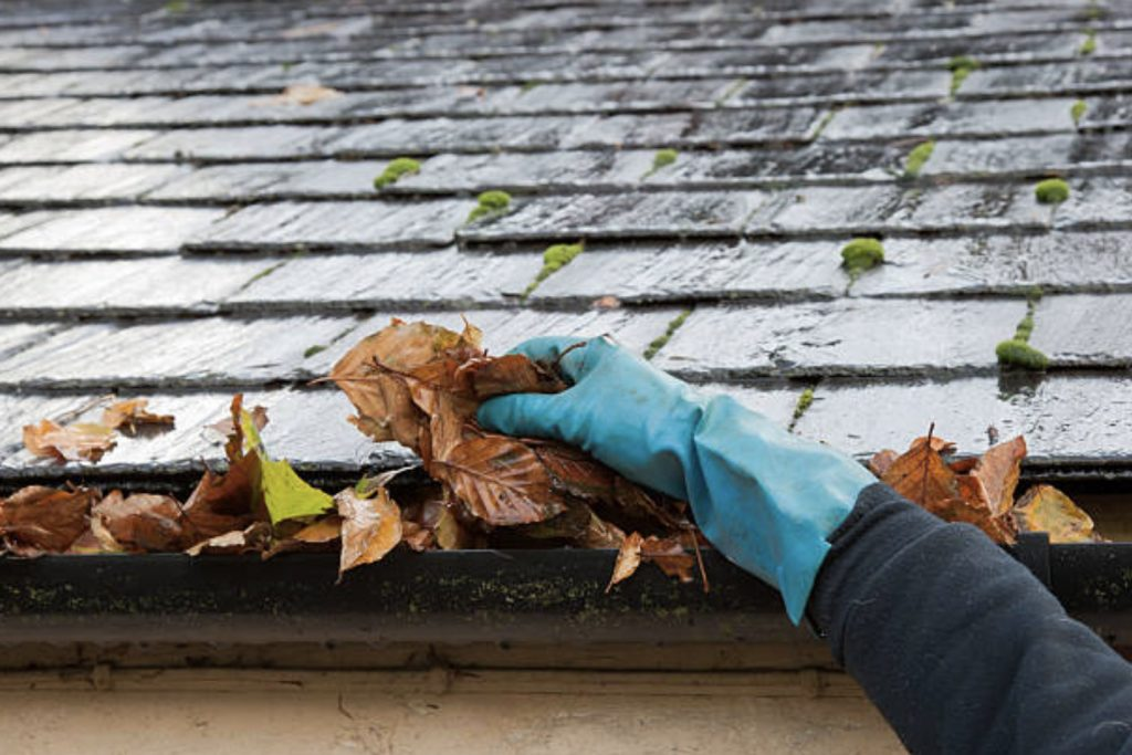 cleaning and maintenance of the roof