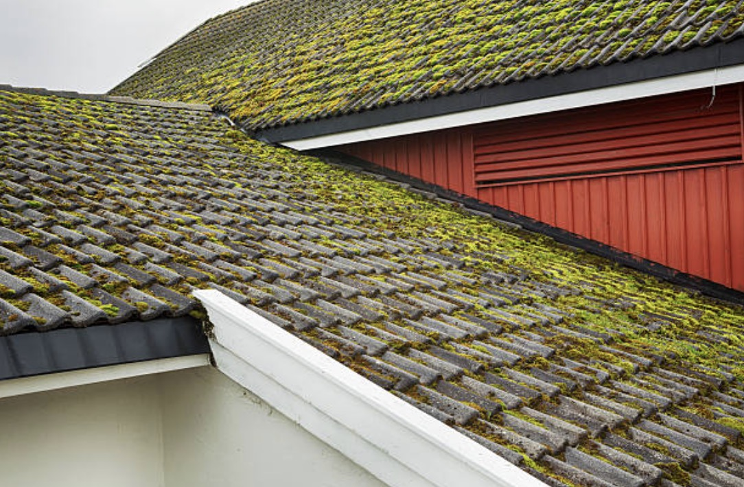 checking moss on the roof is one of the residential roof inspection checklist