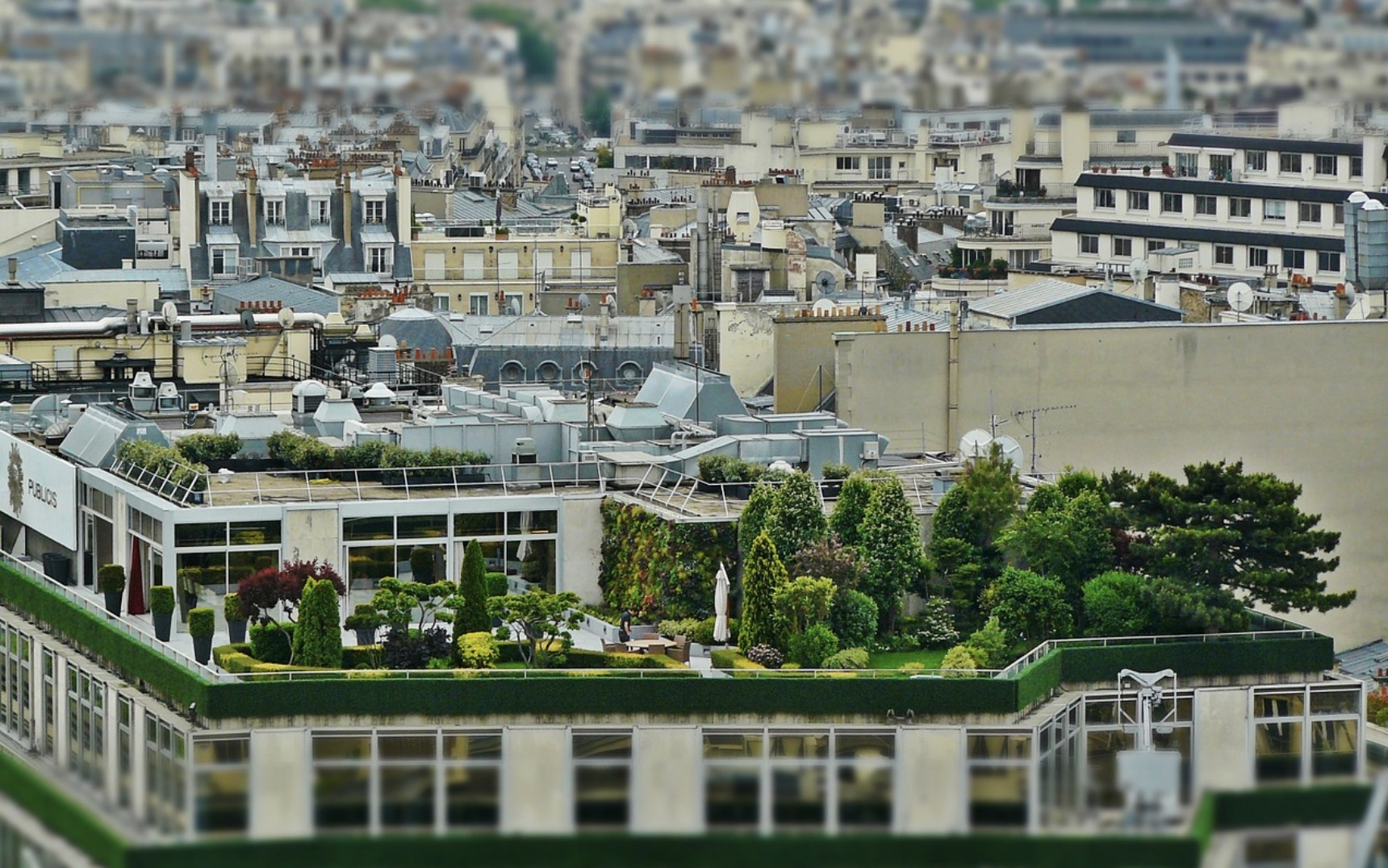 green roofs with trees and plants