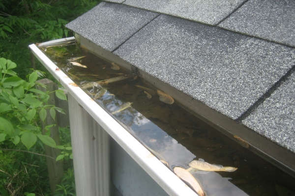 A dirty rain gutter system with leaves and muck