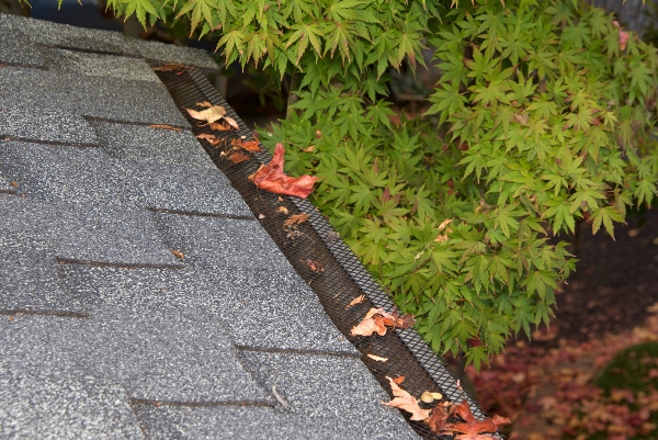 leaves on mesh gutter guards