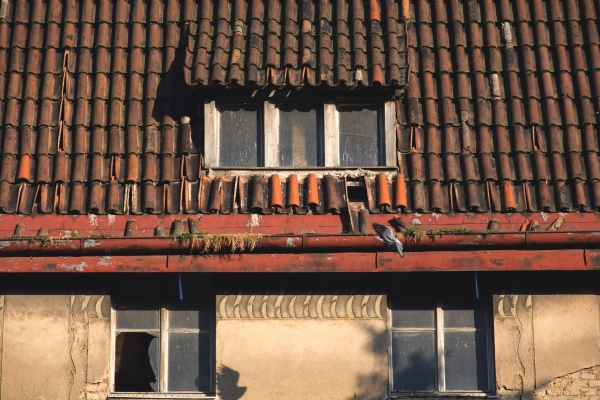 an aged clay tile roof in an abandoned home