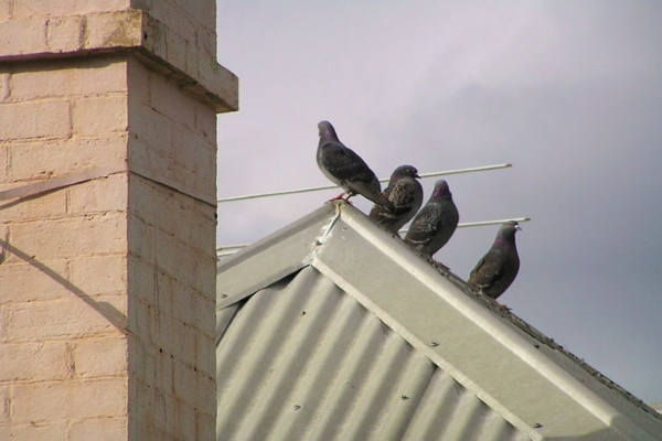 birds perched on top of a hipped metal roof